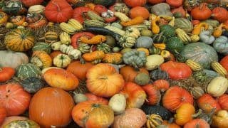 Pumpkin Festival: Fiesta Presenting a Variety of Colourful Pumpkins