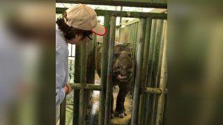 Sumatran Rhinos Now Extinct In Malaysia After The Last Living Female Rhino Dies of Cancer