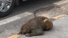 घायल बंदर ने मेनका गांधी का खींचा ध्यान, ट्विटर यूजर को मंत्री ने कहा- मैं कार भेजती हूं