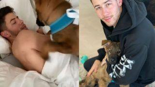 Priyanka Chopra And Nick Jonas Welcome New Member in Family, Meet Cute Gino Here