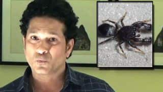 New Species of Spider Named After Sachin Tendulkar - 'Marengo sachintendulkar'