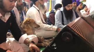 Stray Dog Attends Gurpurab Celebrations and Listens To Kirtan In Gurudwara, Adorable Videos Go Viral