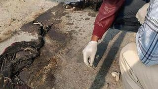 Unnao Rape Victim, Who Was Set on Fire, Dies at Delhi's Safdarjung Hospital