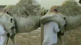 Camel Gives Warm Hug to Owner When he Comes Back After a Few Days in a Viral Video
