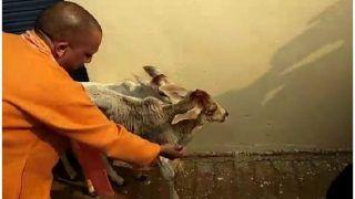 VIDEO: गायों ने नहीं खाई सब्जी तो अफसरों परगुस्साएसीएम योगी,कहा- कभीखिलाया नहीं होगातो खाएंगीकैसे
