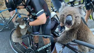 Thirsty Koala Asks For Water From Cyclists Amid Australia Bushfires in an Unfortunate Viral Video
