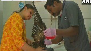 Over 150 Birds Killed By Sharp Kite Strings During Makar Sankranti In Gujarat