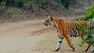 Sexual Distancing Much? Gujarat Zoo Keeps Animals Exempted From Mating Amid Coronavirus Scare