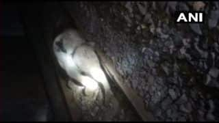 Shocking Video | Elephant Calf Hit by Train Writhes in Pain
