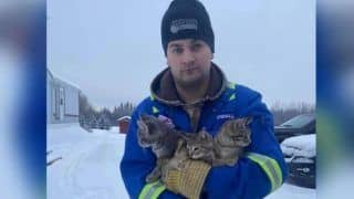 Watch | How This Man Used Coffee to Rescue 3 Kittens Frozen To Ground in Canada