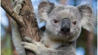 'Entire Species Being Wiped Out': Almost 500 Million Animals Killed In Australia's Bushfires, Fear Ecologists