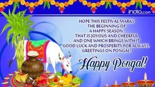 Happy Pongal 2020: Here Are Best Pongal WhatsApp Messages, Greetings And SMS to Celebrate the Tamil Harvest Festival