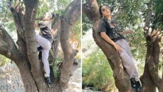 Sunny Leone Goes All Quirky as She Climbs on The Tree From One Branch to Another, Video Goes Viral