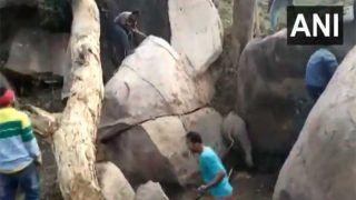 VIDEO: चट्टानों के बीच फंसा ELEPTHANT CALF,  लेकिन हथिनी ने मचाई भगदड़