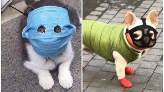 Coronavirus/COVID-19 का जानवरों पर दिखा असर, कुत्तों और बिल्लियों ने पहना फेस मास्क, तस्वीरें देख आ जाएगी हंसी