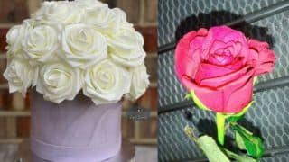 Happy Rose Day 2020: Types of Roses and Their Meanings