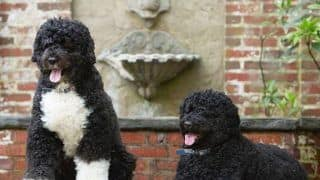 Michelle Obama Shares Adorable Picture of Bo and Sunny on Love Your Pet Day