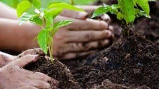 Trending News Today March 05, 2020: Yogi Govt to Launch 'One District, One Tree' In a Bid to Increase Green Cover in UP
