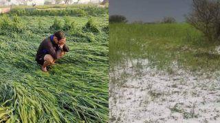 बेमौसम बरसात, ओलवृष्टि से गेहूं, सरसों, चना को भारी नुकसान, किसानों का संकट बढ़ा