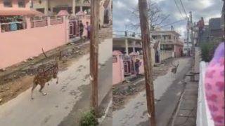 Viral Video: Deer Runs Across Empty Street in Dehradun Amid Coronavirus Lockdown