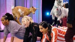 Trending News Today March 04, 2020: Lilly Singh's 'Goat Yoga' is The Most Hilarious Thing on Internet Today! Check Videos