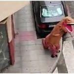 Watch | Spanish Man Tries to Escape Coronavirus Lockdown by Dressing As Dinosaur, Video Amuses Twitter