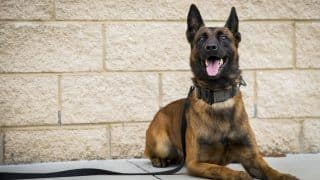 Could Dogs Help Detect COVID-19? Canines Are Being Trained in UK to Sniff Out Virus