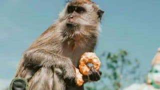 Delhi Cops Feed Hungry Birds, Monkeys to Help Them Survive Covid-19 Lockdown