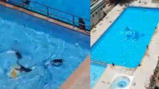 At least Someone's Having Fun! Monkeys Have a Pool Party in Mumbai Amid Coronavirus Lockdown