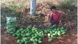 Prakash Raj Introduces His Son Vedant as Mango Seller at Their Farm, Pic Goes Viral