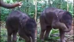 Baby Elephant Sets Hygiene Example For Humans Amid COVID-19 And THIS Video is Proof!