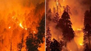 '2020 Is So Cruel': Heartbreaking Visuals of Uttarakhand Forest Fires Emerge on Twitter, Netizens Appeal For Help