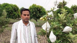 Little Kashmir in Telangana: After Four Long Years, Tribal Farmer Harvests Maiden Apple Crop