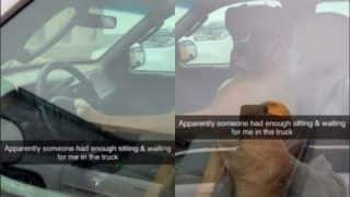 Dog Showing Impatience at Owner by Pressing Car Horn is Too Hilarious to Miss