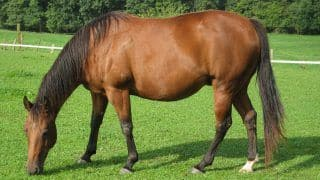 Horse Which Ferried its Owner from Kashmir to Rajouri Placed Under 'Home Quarantine'
