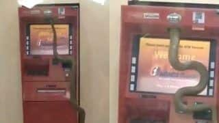 Stuff of Nightmares! Video of Snake Crawling Inside ATM Machine Will Make You Think Twice About Taking Out Money