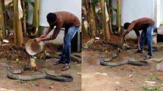 Warning! Do Not Try This at Home: Netizens Left Shocked as Man Casually Gives King Cobra a Bath