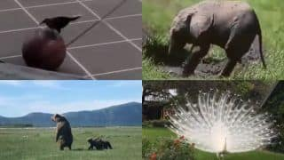 What Better Way to End The Day Than to Watch Animals be Their Beautiful, Cheeky And Playful Best