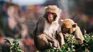 पानी की टंकी में मिले 13 बंदरों के शव, स्थानीय लोगों का आरोप- जहर देकर की गई हत्या