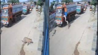 WATCH: After Being Spotted Resting on Road, Leopard Attacks Truck Cleaner in Hyderabad