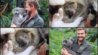 'Joey of Season'! Reptile Park Welcomes First Baby Koala as 'Ray of Hope' Since Devastating Australian Bushfire