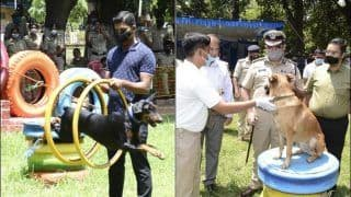 Paw-fect! Karnataka Police Gears up For Admission of 50 Dogs to Strengthen The Squad