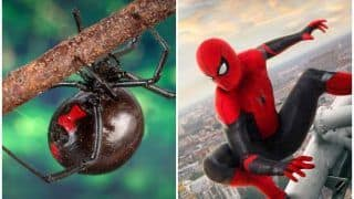 3 Brothers Let Black Widow Spider Sting Them Hoping They Would Turn into Spider-Man, Hospitalised