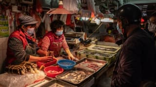 Finally! Amid Mounting Pressure, China's Wuhan Bans Eating & Hunting of Wild Animals
