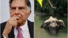 केरल में प्रेग्नेंट हथिनी की हत्या पर बोले उद्योगपति रतन टाटा- 'दोषियों के खिलाफ सख्त कार्रवाई हो'