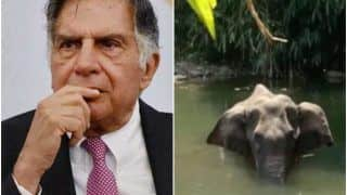 Ratan Tata Calls Death of Pregnant Elephant in Kerala a 'Mediated Murder', Says 'Justice Needs to Prevail'