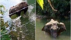 दर्दनाक: गर्भवती हथिनी को खिला दिया पटाखे भरा अनानास, मुंह में विस्फोट, पानी में खड़े-खड़े मौत