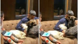 MS Dhoni Cuddling His Pet Dogs During COVID-19 Lockdown Will Melt Your Heart | WATCH VIDEO
