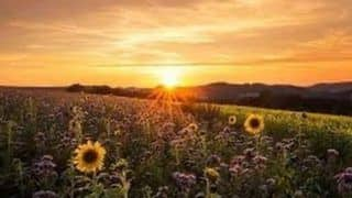 Summer Solstice 2020: All You Need to Know About The Longest Day of The Year