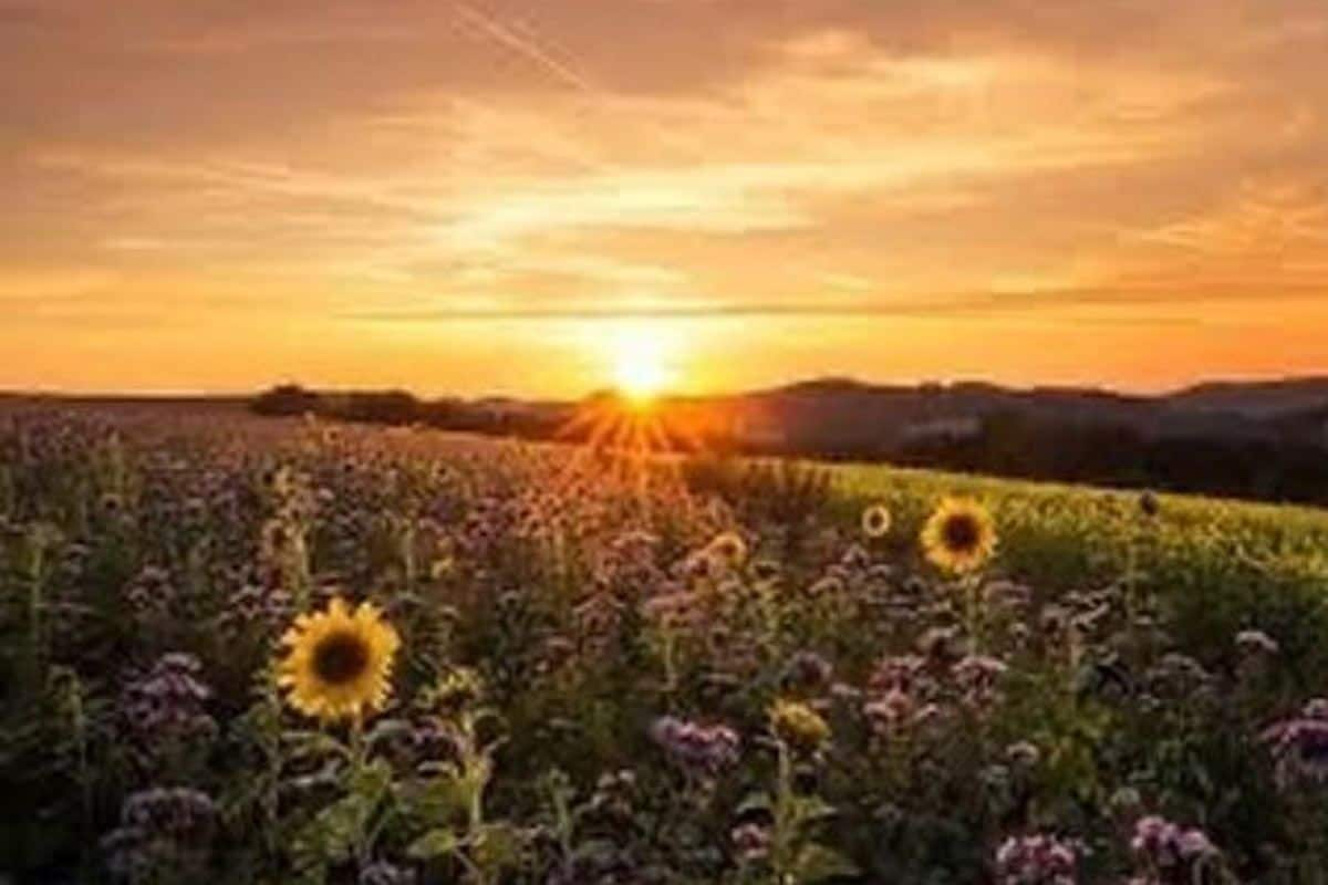 summer solstice 2020  all you need to know about the